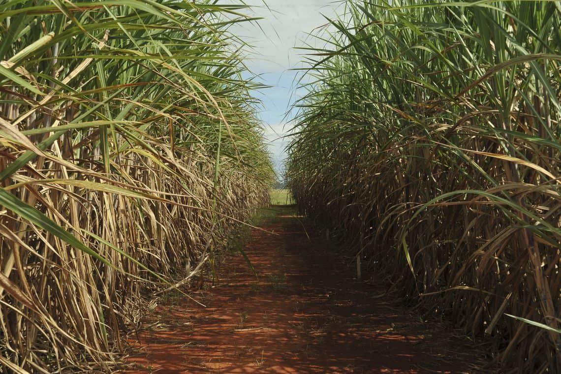 Biomassa da cana será valorizada com o RenovaBio